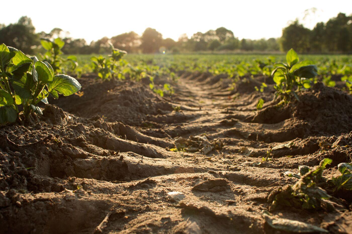 Soil Organic Carbon Expert (f/m/x) - 80% - 100% - Job Berlin - T